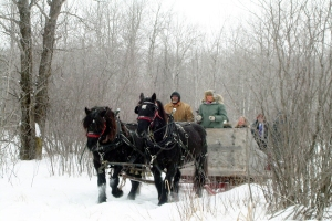 carriedriving-1-mb-2007