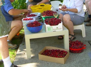 Cherry picking1 09