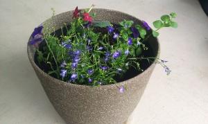 Pot 1 latest picture