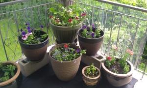 pots latest picture 2